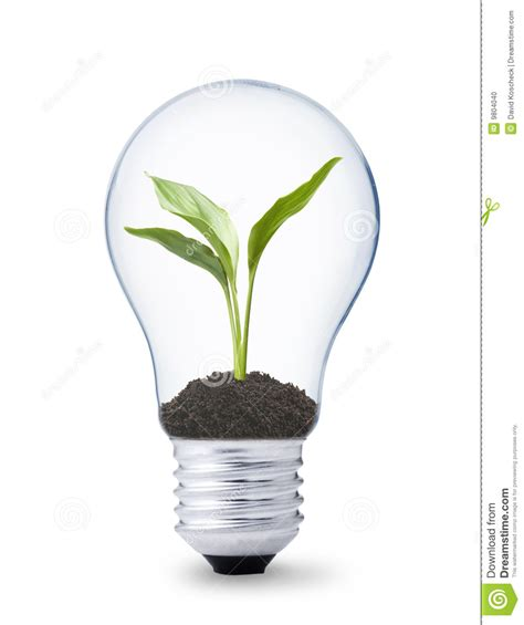 plant growing inside a lightbulb stock photo image 9804040