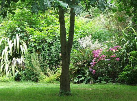 gardens with trees apple tree garden