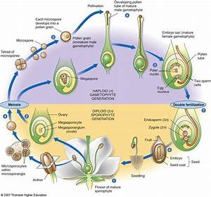 Plants Life Cycle  U0026 Structure