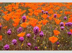 Flori de Primavara 70 de poze absolut superbe cu flori