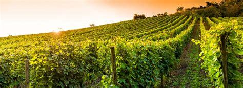 Liener Weinbau