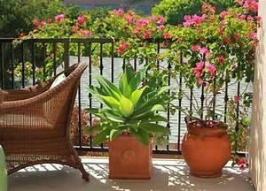 Kletterpflanzen Für Balkon : balkon sichtschutz ideen gelaender bepflanzung ~ Lizthompson.info Haus und Dekorationen