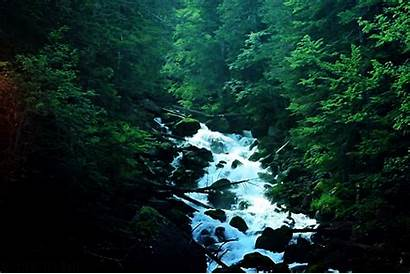 Forest Nature Landscape Scenic Waterfall Gifs End