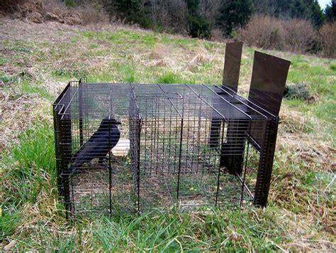 piege a pigeon fait maison delightful fabrication d un poulailler 1 poulaillers swyze