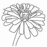 Coloring Zinnia Flower Flowers Printable Visit Getcolorings Momjunction sketch template