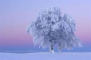 Portraits Of Wondrous Earth  Ice Storm Glazed Tree  Poetic