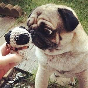 funniest baby shower animals pug expression dump a day