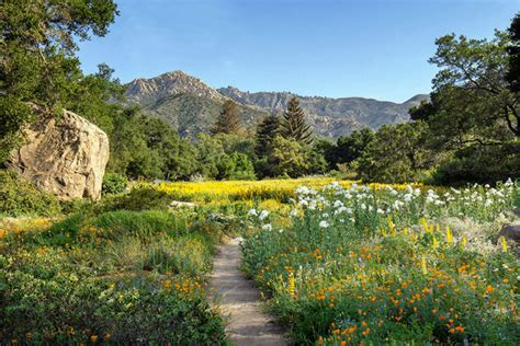 santa barbara botanical gardens tourist attractions in santa barbara that offer the