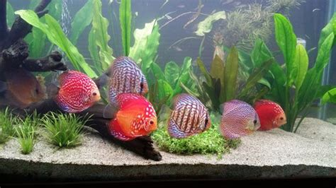 heure eclairage aquarium l 233 clairage dans les aquariums