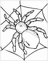 Coloring Insects Pages Children Insect Printable Spider Justcolor sketch template