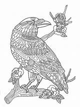 Coloring Zentangle Crow Adults Adult Mycoloring Birds Kolibri Stilisierte Schwarzen Shutterstock Gezeichnet sketch template