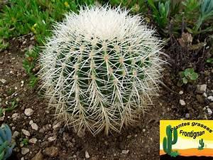 Cactus Sans Epine : echinocactus grusonii ~ Melissatoandfro.com Idées de Décoration
