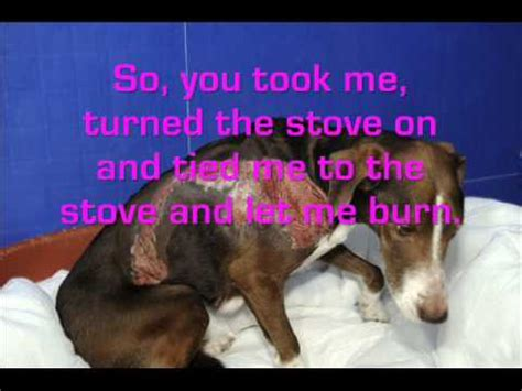 Sad Stories About Animal Abuse