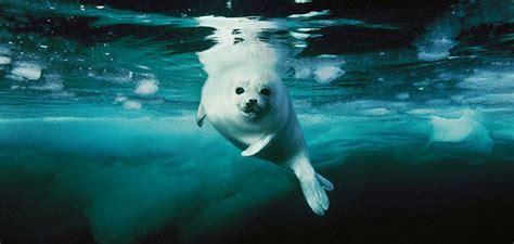 amazing underwater   ocean creatures science