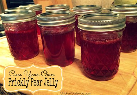 prickly pear jelly prickly pear jelly recipe archives chickens are a gateway animal