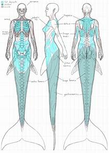 Mermaid Diagram