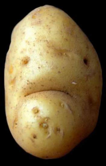 ugly potato louise  wattpad