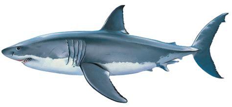 cuisine jaune citron encyclopédie larousse en ligne requin blanc
