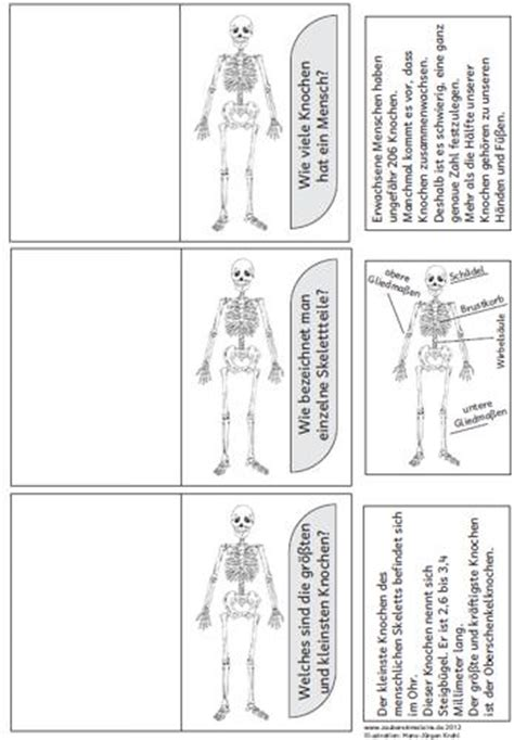 zum skelett zaubereinmaleins designblog