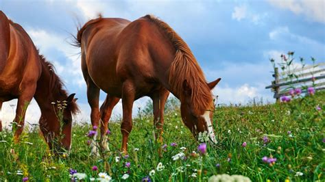 horses france horse killed mutilations ritual mysterious killings sky attacked pony police grazing