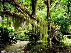 原始森林摄影图 山水风景 自然景观 摄影图库 昵图网nipic com