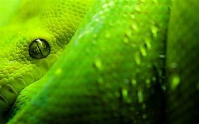 Anaconda Snake Eyes