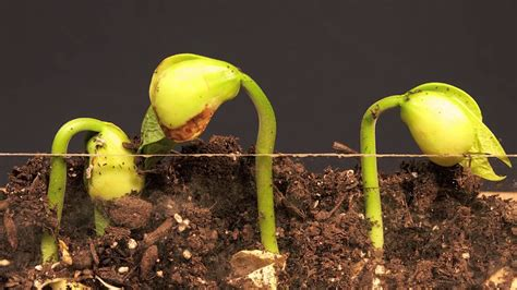 plants growth very very fast,How to make your seeds grow ...