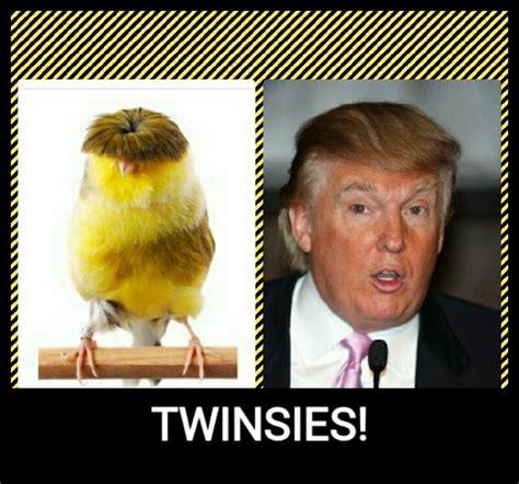 Funny Pics Memes - 10 donald trump hairs funny hilarious memes funny pics pics story