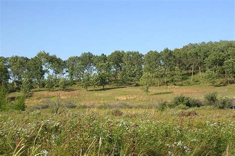 savanna oak a disappearing ecosystem minnesota s oak savannas minnpost