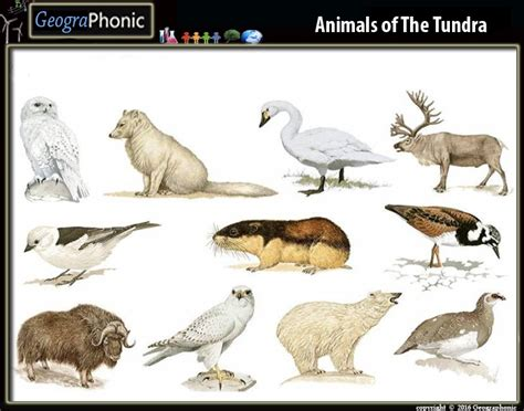 Game | Animal species of the Tundra Biome