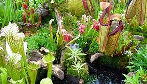 How To Feed Carnivorous Plants