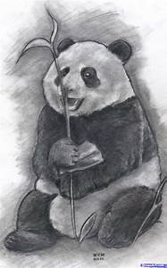 How to Draw a Realistic Panda, Draw Real Panda, Step by ...