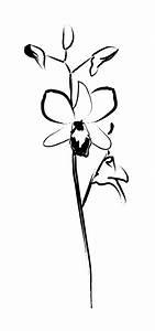 gousicteco: Orchid Line Art Images