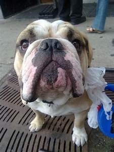 Seis ideas divertidas para recoger los excrementos del perro EROSKI CONSUMER