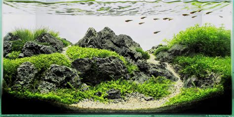 mountain aquascape mountain aquascape www bilderbeste