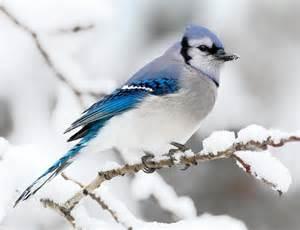 Winter Bird Inspiration