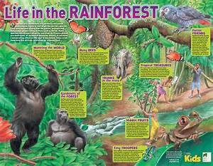 National Geographic Kids And Year Of The Gorilla  Life In