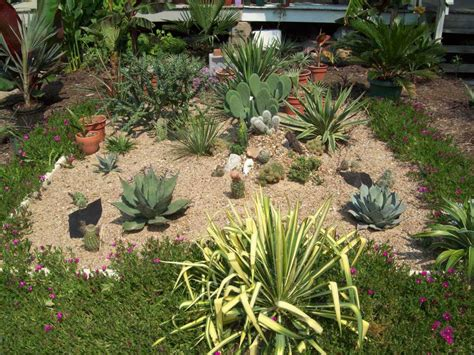 cacti gardens cactus images images of everything