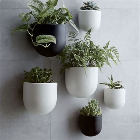 wall planters  outdoor  indoor house plants