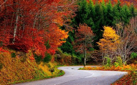 colorful autumn trees wallpapers colorful
