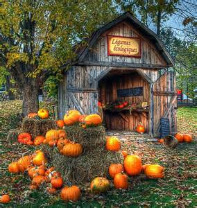 Fall Scenes with Pumpkins and Barn