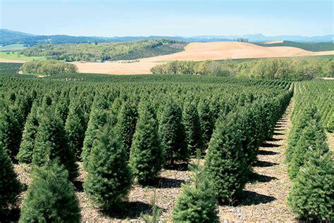 oregon christmas tree growers oregon s nursery and tree industry grows farm flavor