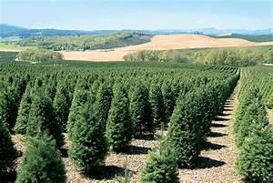 Oregon's Nursery and Christmas Tree Industry Grows | Farm ...