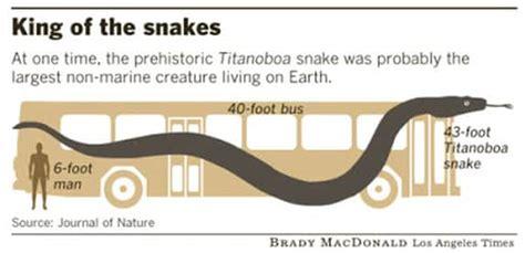 titanoboa snake facts