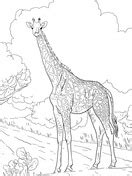 giraffes coloring pages  coloring pages