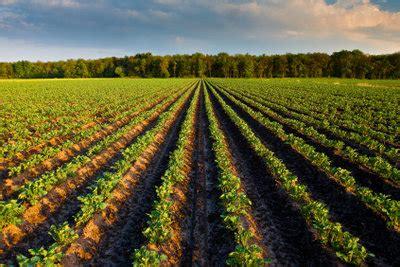 wie sie kartoffeln richtig pflanzen abstand und bodenbeschaffenheit ber 252 cksichtigen