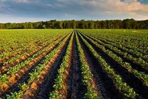Blumenkohl Pflanzen Abstand : wie sie kartoffeln richtig pflanzen abstand und bodenbeschaffenheit ber cksichtigen ~ Whattoseeinmadrid.com Haus und Dekorationen