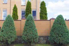Thuja Brabant Oder Smaragd : thuja brabant oder smaragd welche lebensbaumsorte ist besser ~ Orissabook.com Haus und Dekorationen