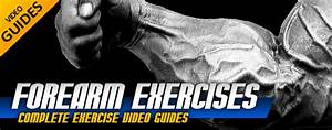 Forearm Exercises  Over 200 Exercise Video Guides