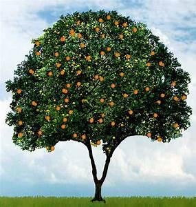 The Gnostic Order Of Christ  Orange Exercise